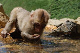 monkey_examine